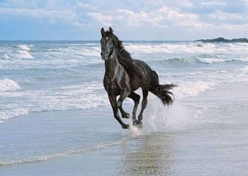 cheval-sur-la-plage.